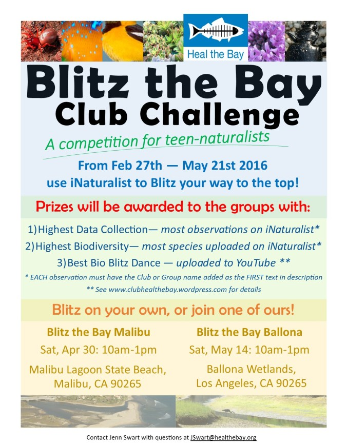 Blitz the Bay Challange